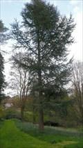 Image for Graythwaite Hall Gardens, Cumbria