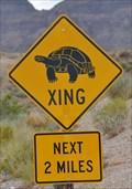 Image for Desert Tortoise Crossing Echo Bay Road