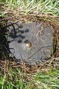 Image for RD Meetpunt: 179324 - Nieuweroord NL