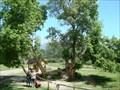 Image for Old Deformed Box Elder Tree at Wheeler Farm - Murray, Utah USA