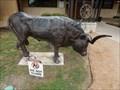 Image for Longhorn Bull - San Antonio, TX