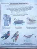 Image for Les oiseaux du marais de Maizerets - Québec City, Canada