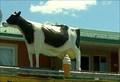 Image for La vache de la crèmerie-Marieville-Québec,Canada
