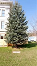 Image for 911 Memorial Tree - Missoula County Courthouse - Missoula, MT