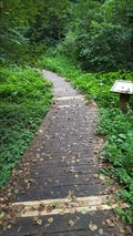 Image for Forest Boardwalk - Hégenheim, Alsace, France