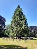 Image for Mammutbäume auf dem Südfriedhof - Köln, NRW, Germany