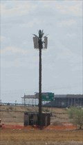 Image for Talking Tree (McDowell & Sarival)