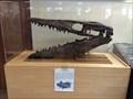 Image for Tylosaurus proriger - Bryce, UT