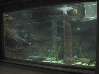 Texas Freshwater Fisheries Center - Athens, Texas - Public Aquariums ...