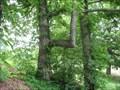 Image for Elma Meadows Trail Trees-Elma , New York.
