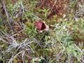 Image for Raspberry Island - Isle Royale National Park, MI