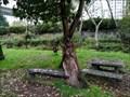 Image for Goat bench - A Valenzá, Barbadás, Ourense, Galicia, España