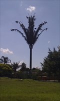 Image for Disguised cell phone tower Wierda Park, Pretoria,ZA