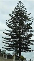 Image for Largest tree of Caldas da Rainha-Portugal
