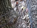 Image for Pipe-Eating Tree - Denton, TX
