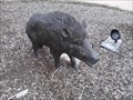 Image for U of A Campus Razorback Mascot #3 - Fayetteville AR