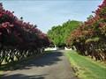 Image for Dawson Cemetery, Dawson, TX, USA