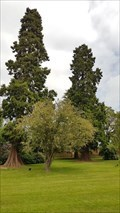 Image for Giant Sequoia - Weston Park - Weston-under-Lizard, Staffordshire