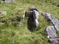 Image for Cist, Down Tor, South Dartmoor, Devon UK