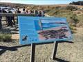 Image for Point Piedras Blancas, A Recent Colony - San Simeon, CA