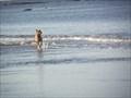 Image for Dog Beach - Anglesea, Victoria, Australia