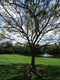 Image for Golden Flame Tree - Brisbane - QLD - Australia
