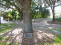 Image for Dedicated tree - Loch Haven Park - Orlando, Florida.