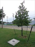 Image for James Wade Memorial Tree - Marietta, OK