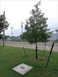 Image for James Wade Memorial Tree - Marietta, OK