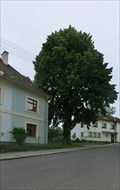 Image for Tree of the republic - Horineves, Czech Republic