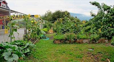 Armstrong Commuity Garden