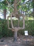 Image for Circus Trees at Gilroy Gardens - Gilroy, California