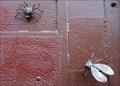 Image for Fliege und Spinne am Werk II