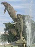 Image for Dolphins - Sarasota, Florida, USA