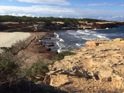 La posidonia cubre la orilla y así quedan protegidos los arenales de los temporales de invierno.