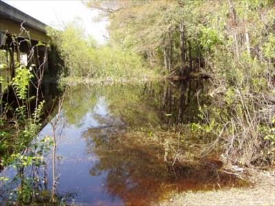 Durbin creek jacksonville florida fishing holes on for Fish creek florida