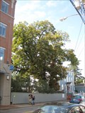 Image for Whipple Declaration of Independence Tree- Portsmouth, NH