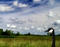 Image for Ottawa National Wildlife Refuge - Oak Harbor,Ohio