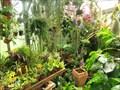 Image for Bonsai Garden, Prague, CZ