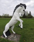 Image for Stallion - Temple, New Brunswick