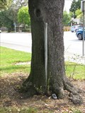 Image for Tree Eating Pole - San Jose, CA