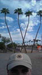 Treeland Nursery Mesa Arizona Greenhouses And Nurseries On Waymarking