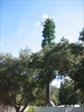 Image for Curlew's Big Tree - Palm Harbor, FL