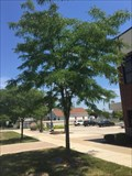Image for Chief Dennis Anderson Tree - Rockwood, MI