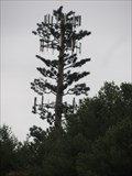 Image for Pine Tree Cell Tower - Salisbury, MA