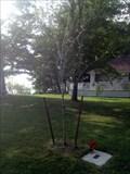 Image for Jake Richardson Tree