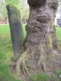 Image for Hungry Tree, St Paul's Churchyard, Birmingham, UK