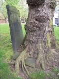 Image for Hungry Tree, St Paul's Churchyard, Birmingham, UK