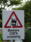 Image for Beware Cats crossing  - Guernsey