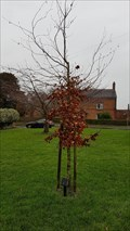 Image for Tim Parry tree - The Green - Dadlington, Leicestershire